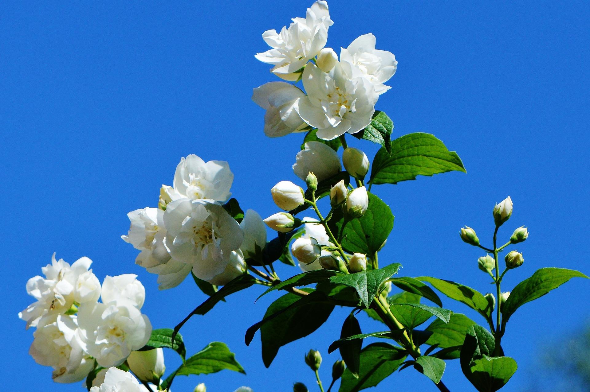 flower-800565_1920